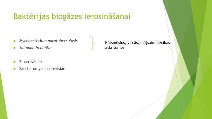 Baktērijas biogāzes ierosināšanai