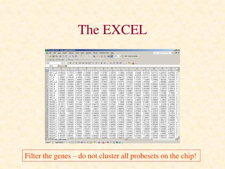 The EXCEL