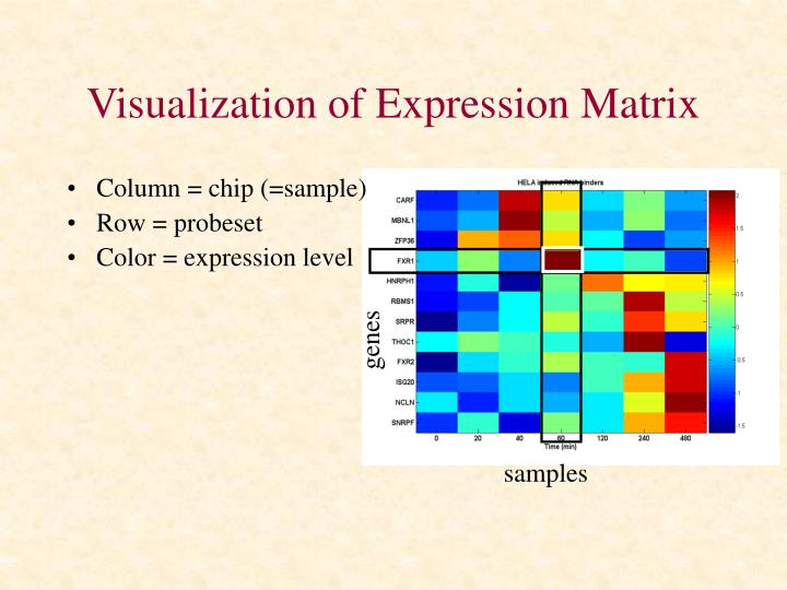 Visualization of Expression Matrix