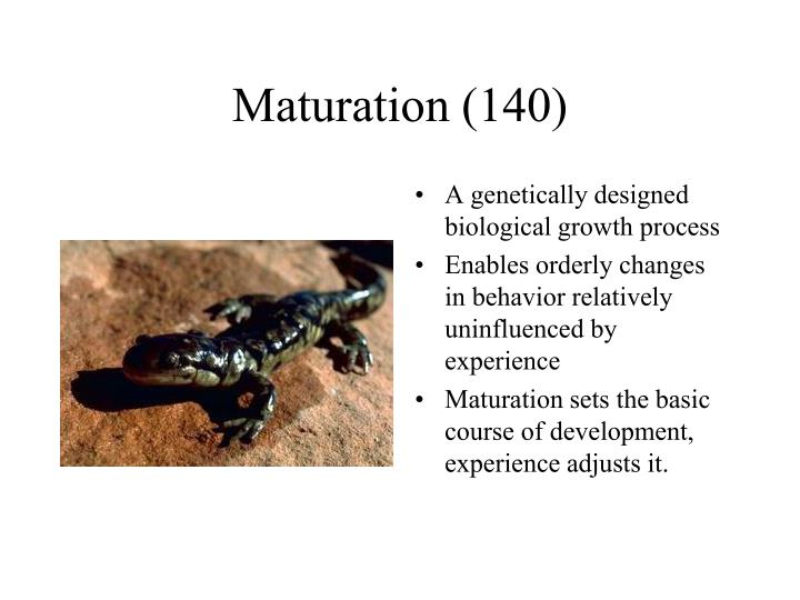 Maturation (140)