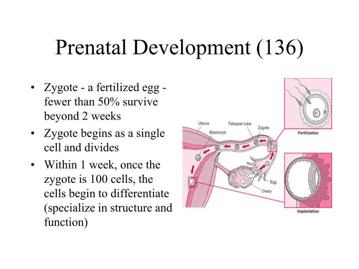 Prenatal Development (136)