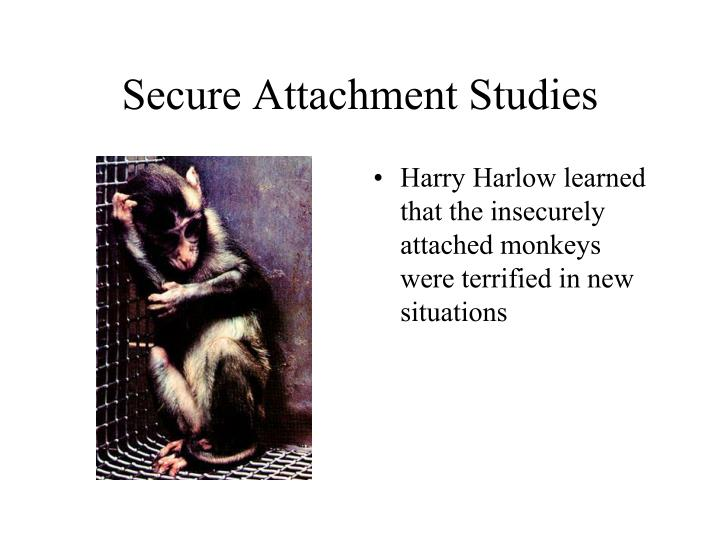 Secure Attachment Studies