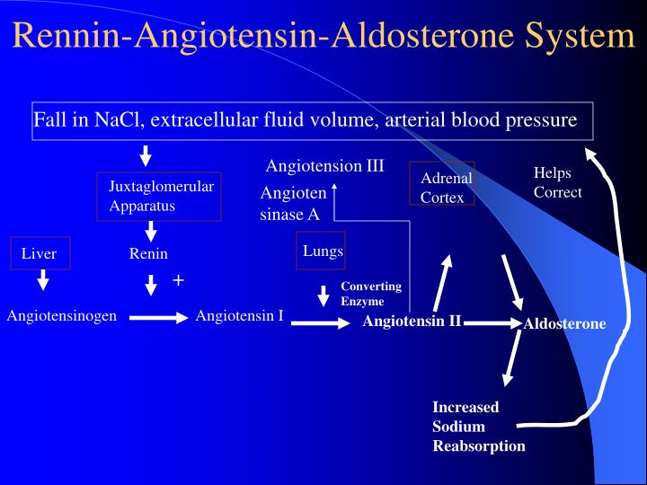 Rennin-Angiotensin-Aldosterone System