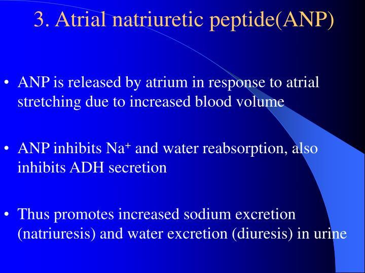 3. Atrial natriuretic peptide(ANP)