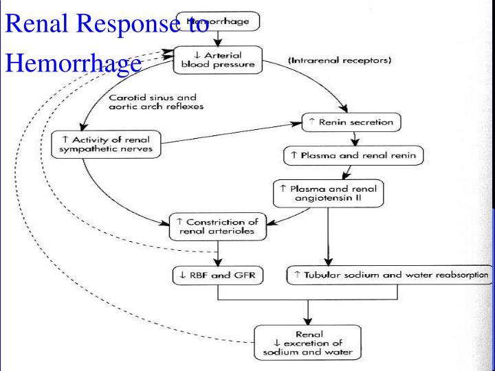 Renal Response to Hemorrhage