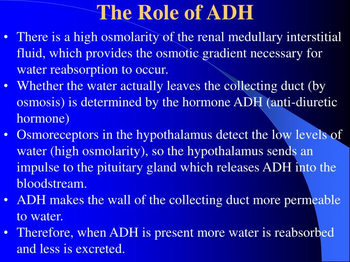 The Role of ADH