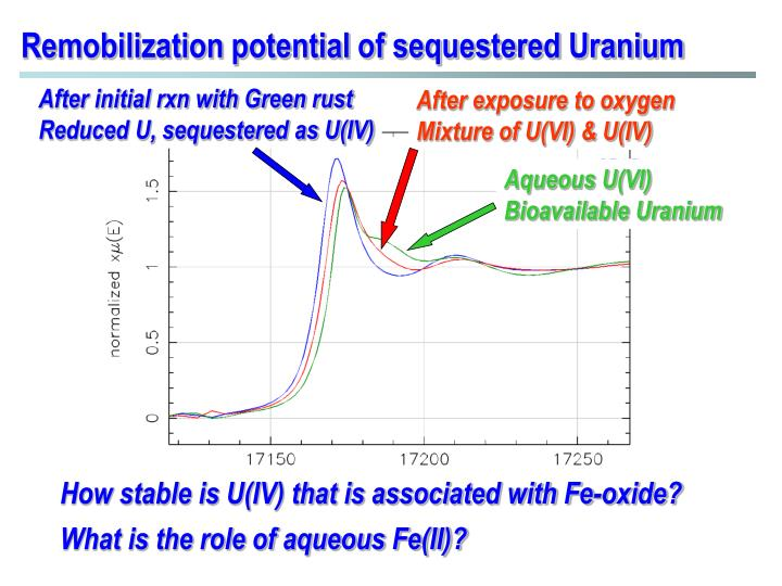 Remobilization potential of sequestered Uranium