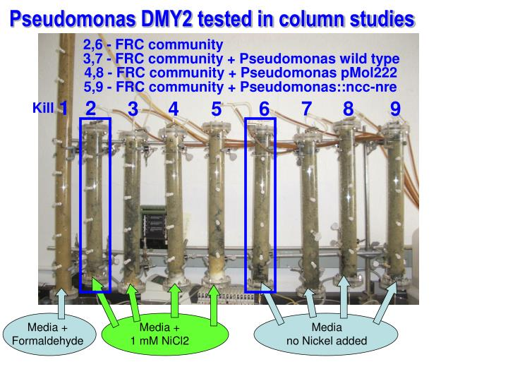 Pseudomonas DMY2 tested in column studies