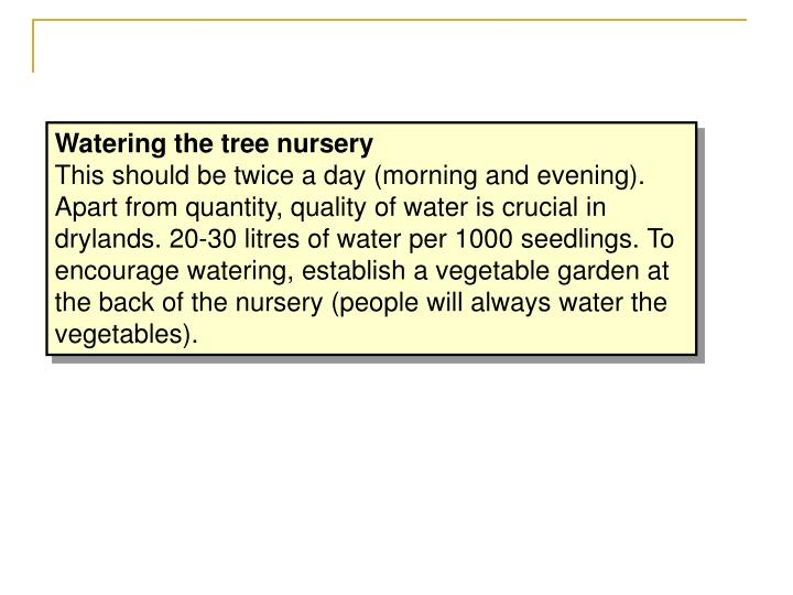 Watering the tree nursery