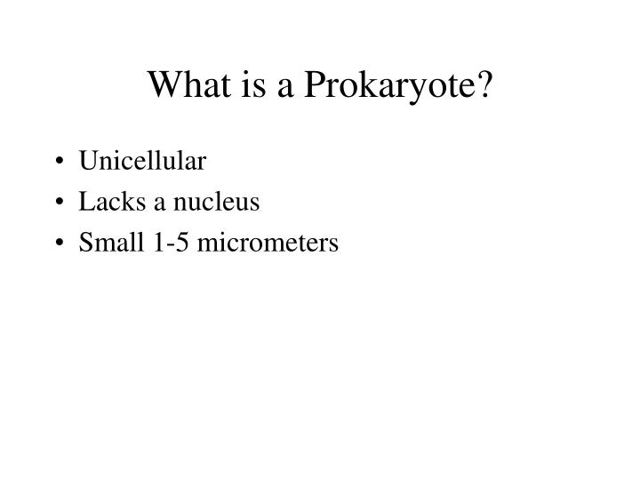 What is a prokaryote