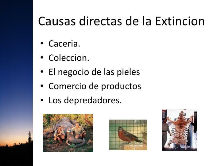 Causas directas de la Extincion