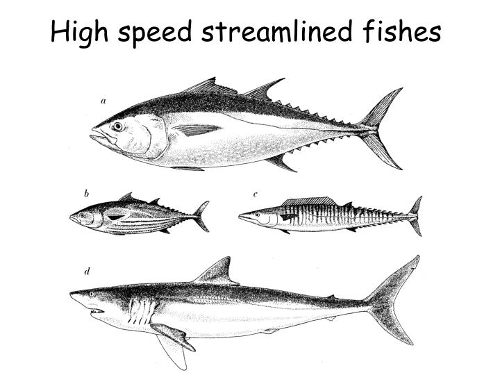 High speed streamlined fishes
