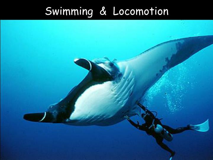 Swimming  &  Locomotion