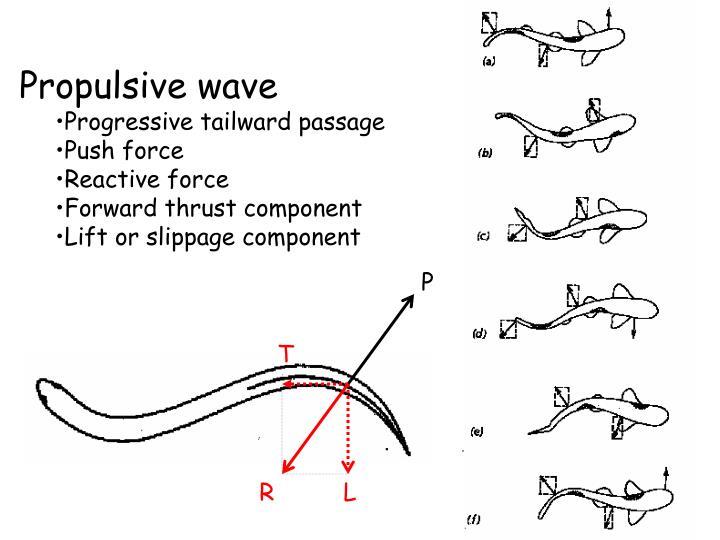 Propulsive wave