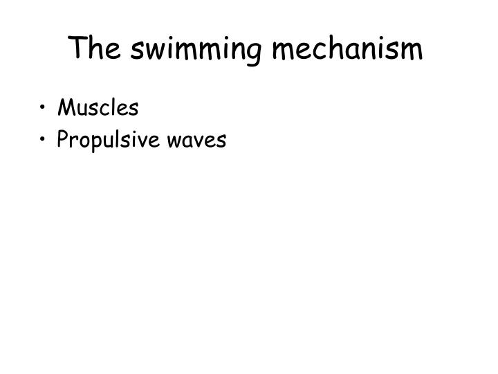 The swimming mechanism