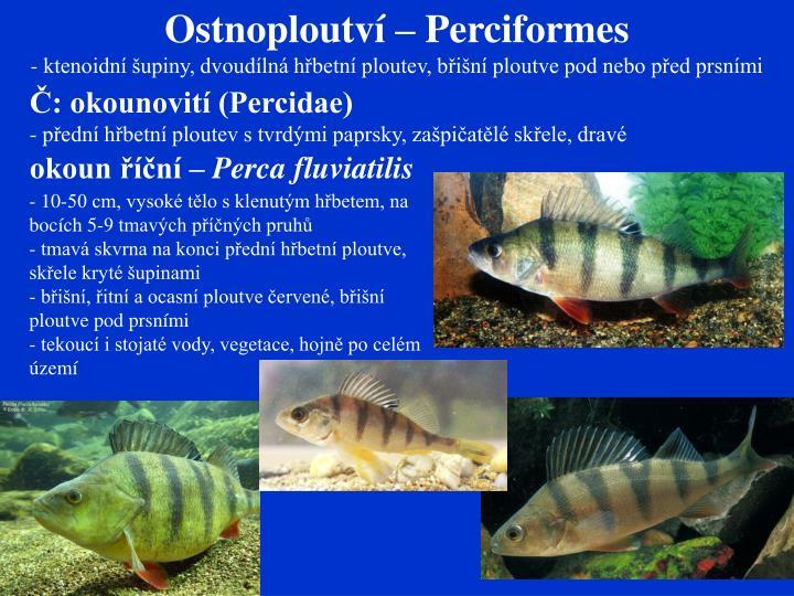 Ostnoploutví – Perciformes