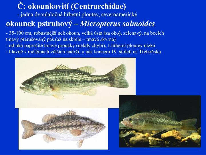 Č: okounkovití (Centrarchidae)