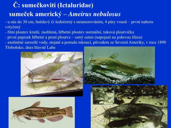 Č: sumečkovití (Ictaluridae)