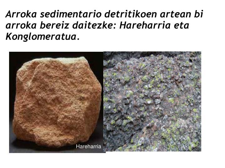 Arroka sedimentario detritikoen artean bi arroka bereiz daitezke: Hareharria eta Konglomeratua.