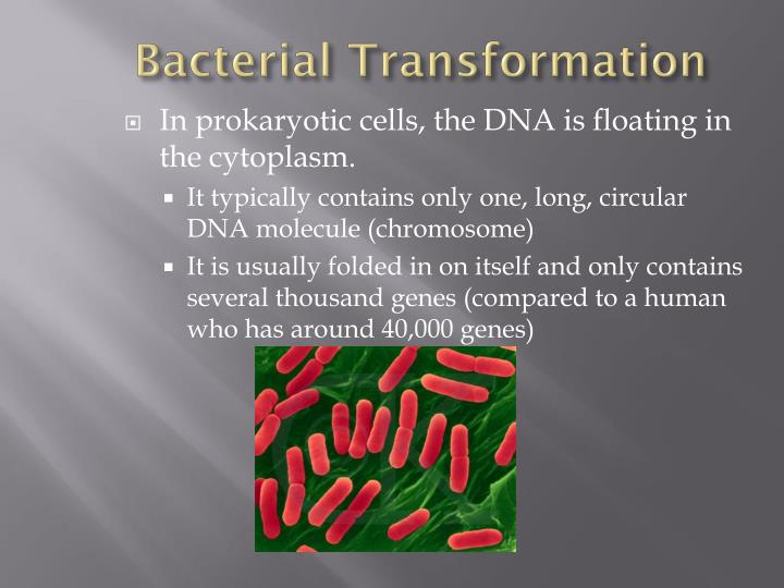 Bacterial Transformation