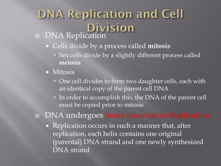 DNA Replication and Cell Division