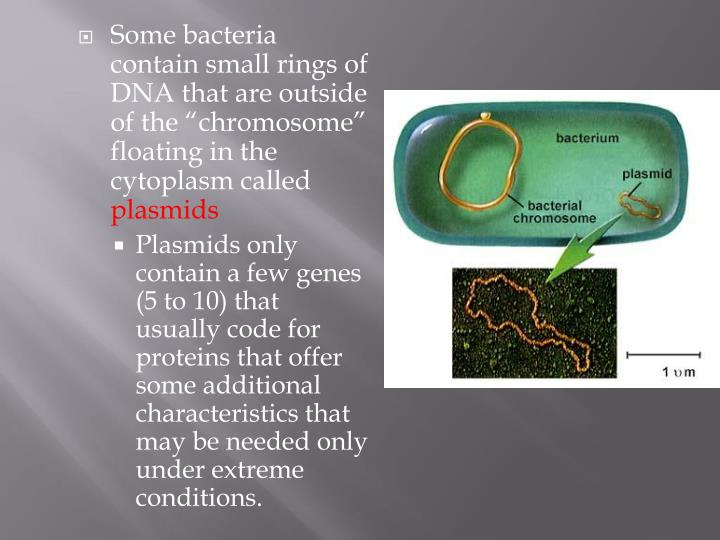 "Some bacteria contain small rings of DNA that are outside of the ""chromosome"" floating in the cytoplasm called"
