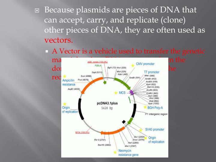 Because plasmids are pieces of DNA that can accept, carry, and replicate (clone) other pieces of DNA, they are often used as