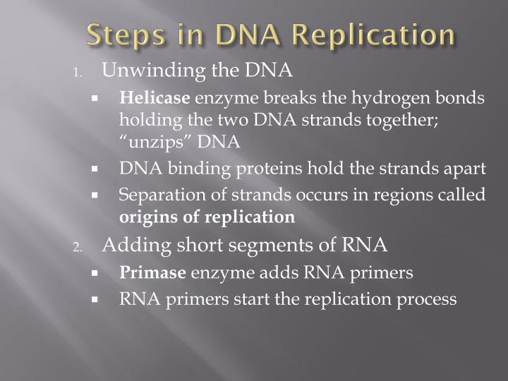 Steps in DNA Replication