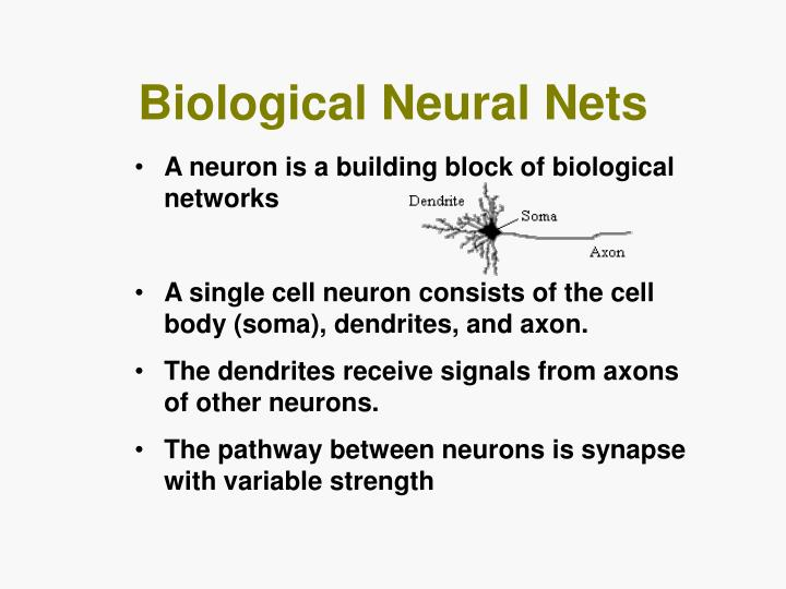 Biological Neural Nets