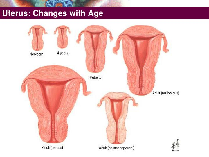 Uterus: Changes with Age