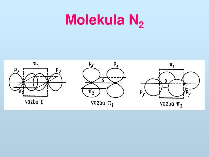 Molekula N
