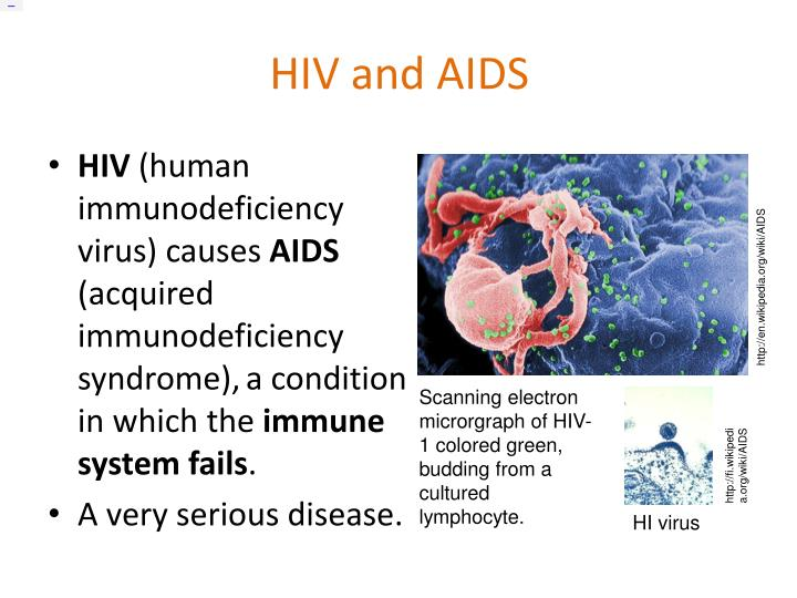 immunodeficiency virus essay