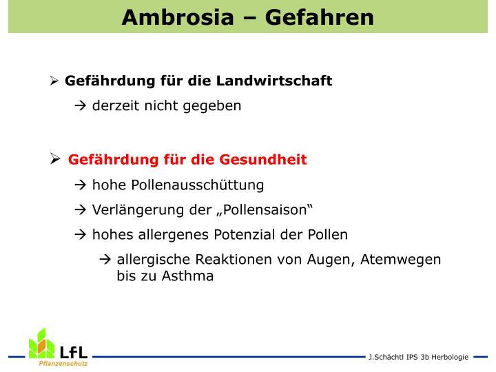 Ambrosia – Gefahren