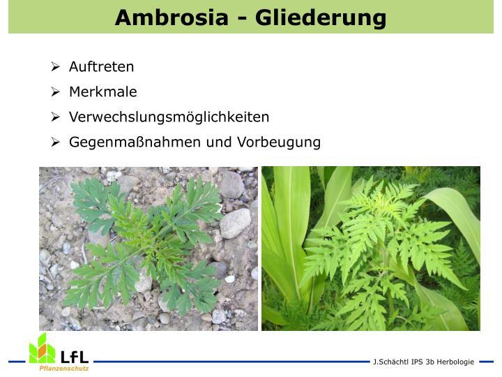 Ambrosia - Gliederung