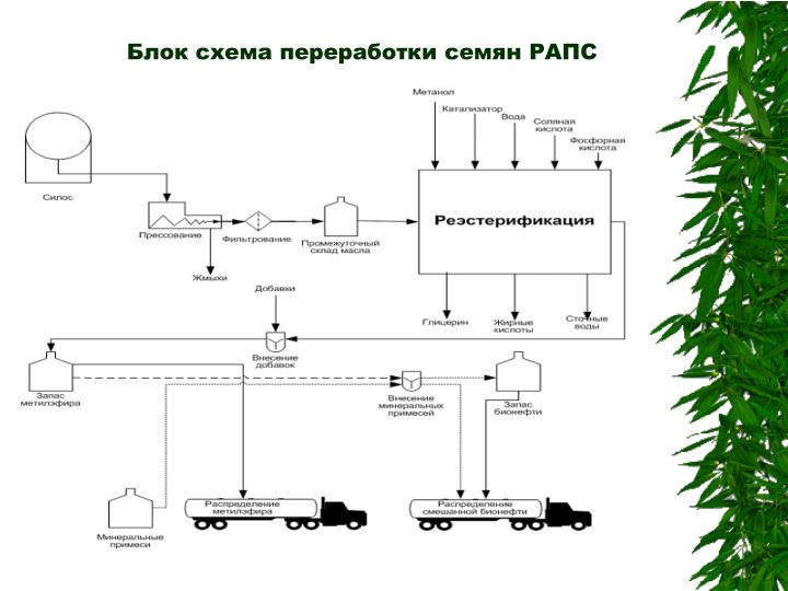 Блок схема переработки семян РАПС
