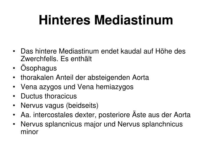 Hinteres Mediastinum