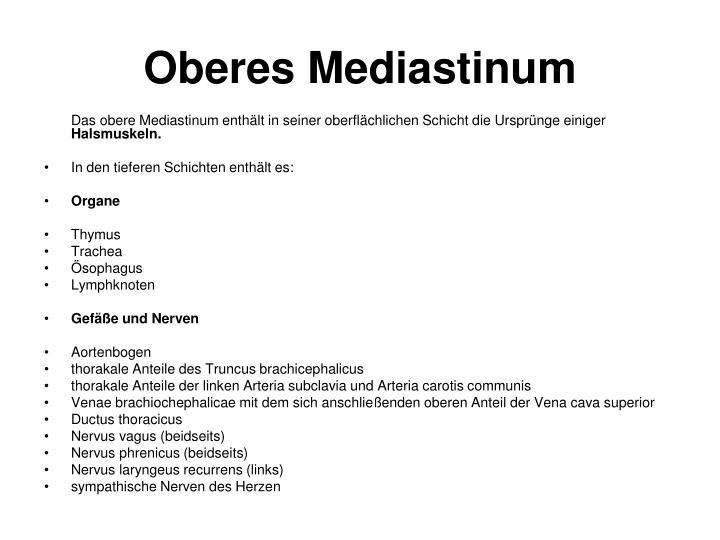 Oberes Mediastinum