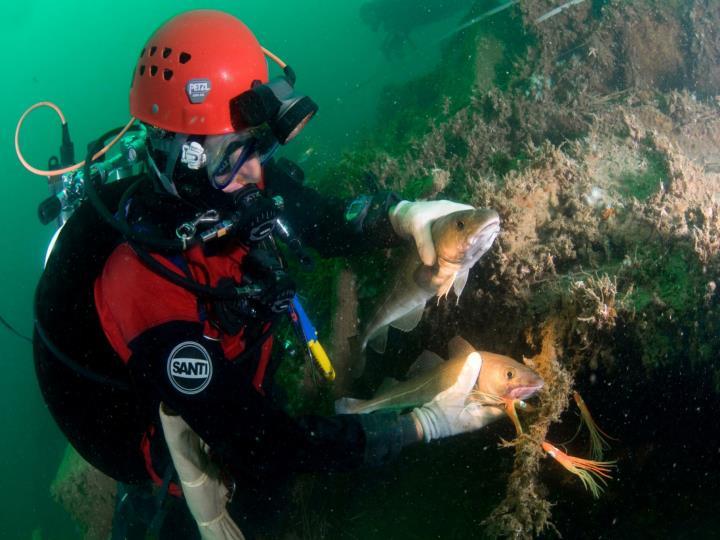 Project Gezonde Zee: wrakken vol leven