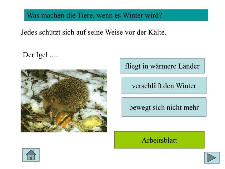 Was machen die Tiere, wenn es Winter wird?