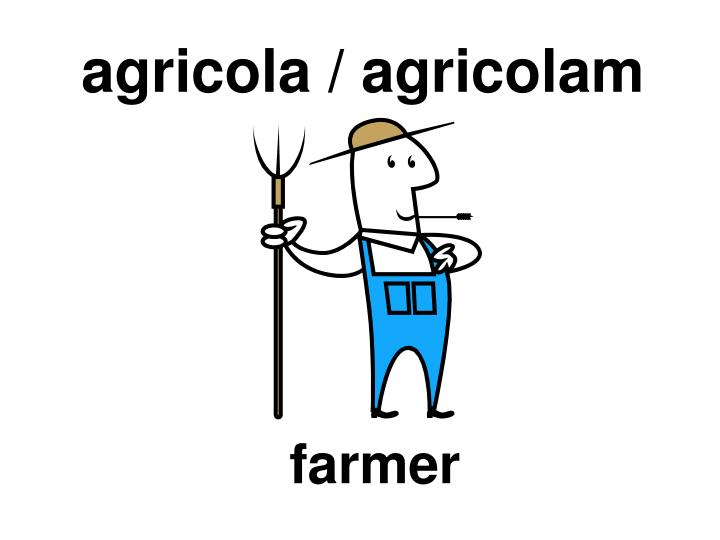 agricola / agricolam