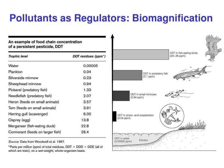 Pollutants as Regulators: Biomagnification