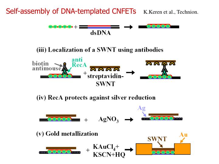 Self-assembly of DNA-templated CNFETs