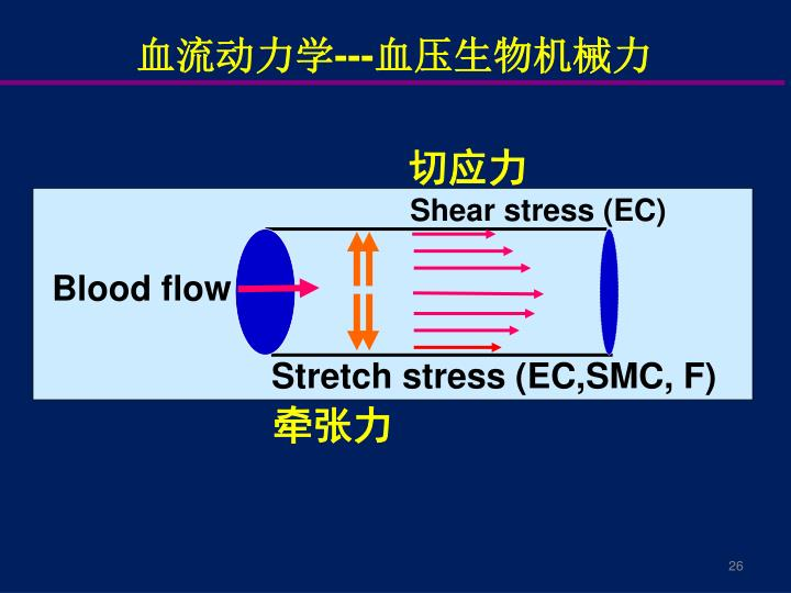 血流动力学