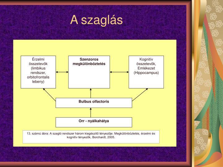rzelmi sszetevk (limbikus rendszer, orbitofrontalis lebeny)