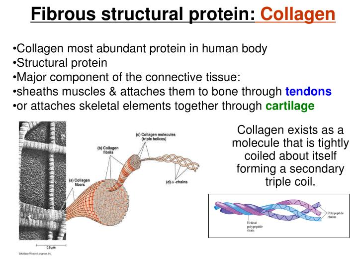 Fibrous structural protein: