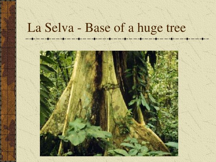 La Selva - Base of a huge tree