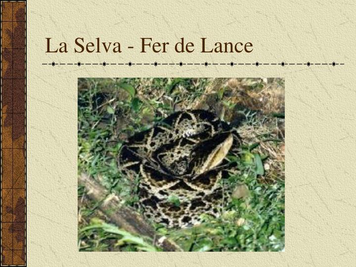 La Selva - Fer de Lance