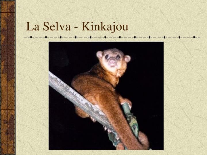 La Selva - Kinkajou