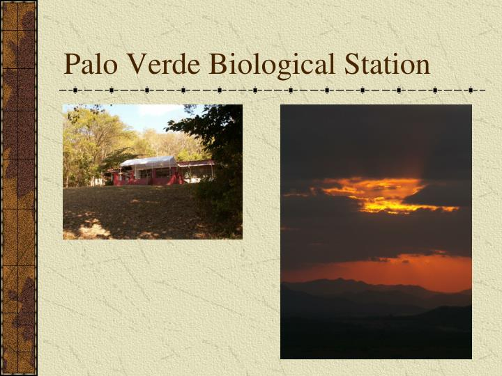 Palo Verde Biological Station