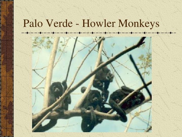 Palo Verde - Howler Monkeys